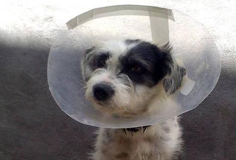 Aprenderán primeros auxilios para mascotas | Héroes Laguna